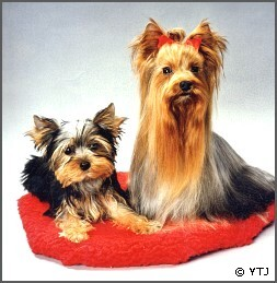 Yorkshire Terrier Journal Download Service